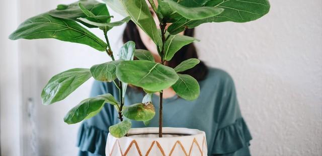 7 φυτά που επιβιώνουν ακόμη κι αν είσαι κατά συρροή plant killer