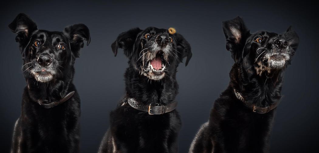 Τι απο αυτα που τρως μπορεις να μοιραστεις με τον σκυλο σου;