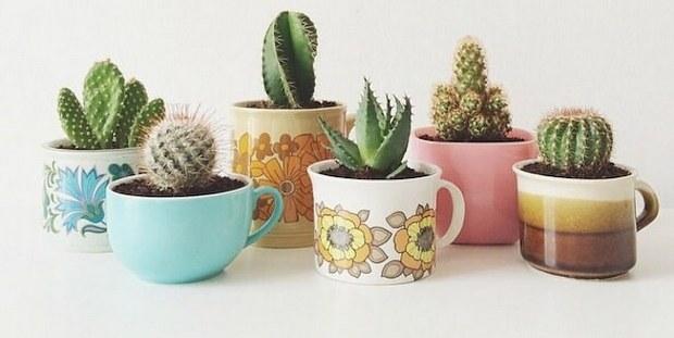 Succulents: Η νέα τάση στα φυτά