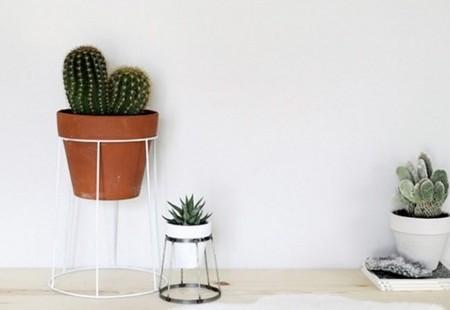 Πώς το φίλτρο καφέ θα σε βοηθήσει στην φροντίδα των φυτών σου