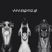 Dogs' Voice: Η πλατφόρμα στήριξης φιλοζωικών οργανώσεων που πρέπει να γνωρίζεις