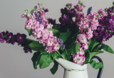 Ανακάλυψε τα 3 φυτά που θα σε βοηθήσουν να κοιμηθείς καλύτερα