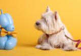 LennyWalks: βρήκαμε τη σχεδιάστρια των πιο in fashion αξεσουάρ για σκύλους