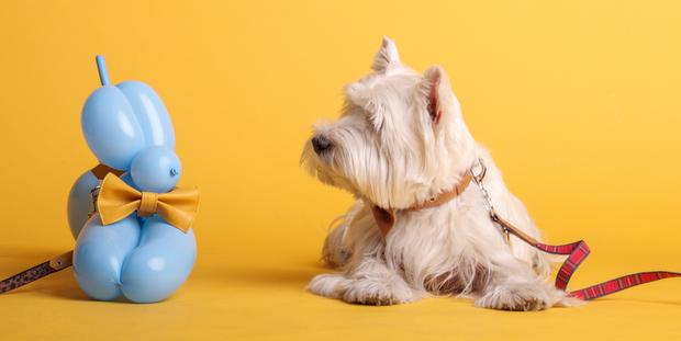 7a6b6e5865f0 LennyWalks  βρήκαμε τη σχεδιάστρια των πιο in fashion αξεσουάρ για σκύλους