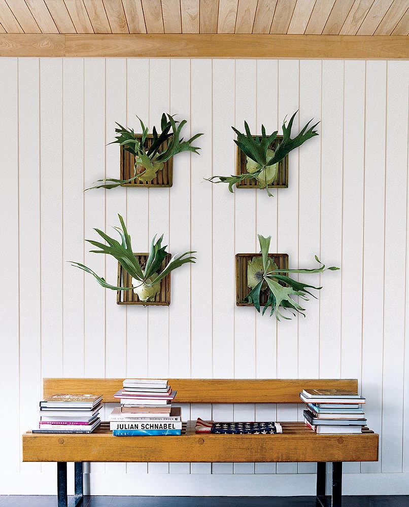 Ideas-Decorating-Houseplants