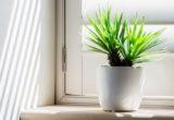 10 φυτά που μπορούν να επιβιώσουν και στην πιο σκοτεινή γωνία του σπιτιού σου