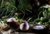 5 facts θα κάνουν την καρδούλα σου να σκιρτήσει για ένα μπολ με σαλάτα