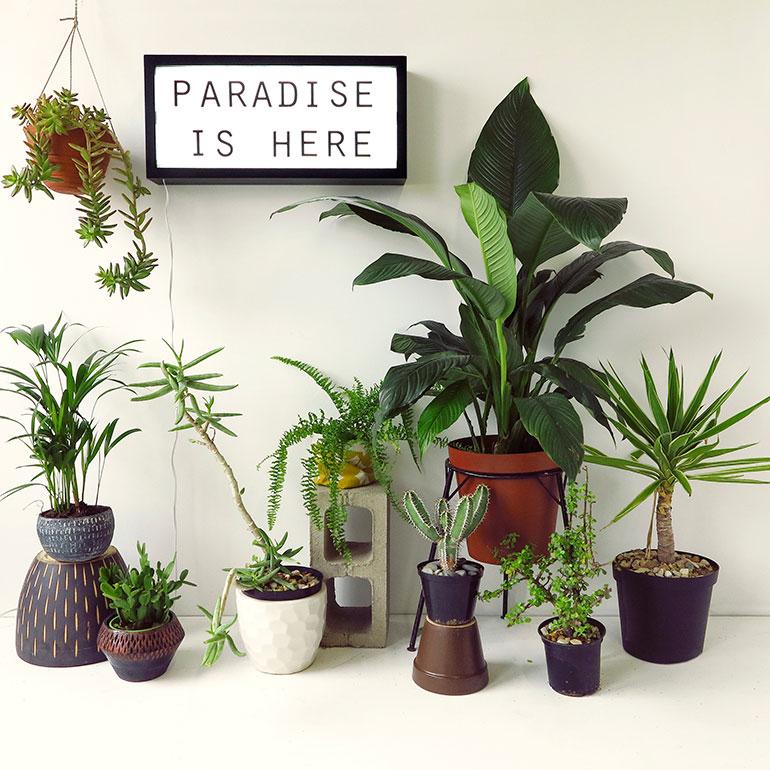 Skinny-Laminx-Paradise-Is-Here