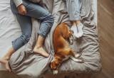 Μήπως ο ύπνος αγκαλιά με τον σκύλο σου, είναι ο λόγος που είσαι συνέχεια κουρασμένη;