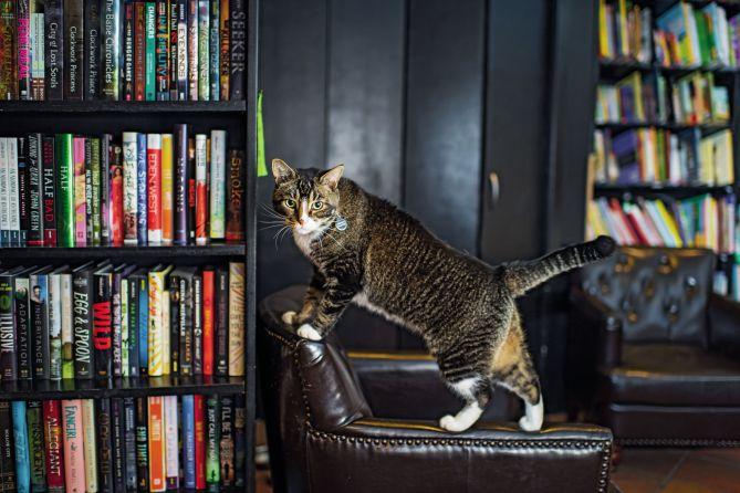 shop cats Andrew Marttila
