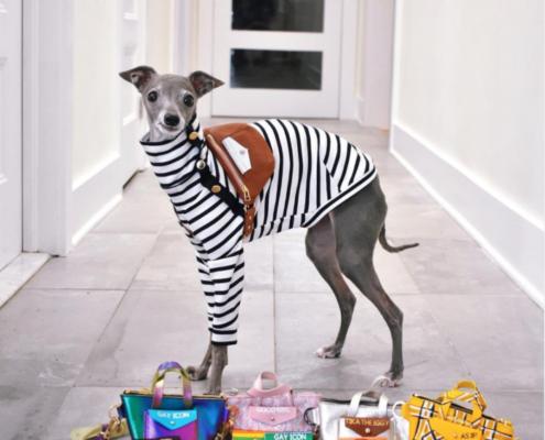 Tika the Iggy O πιο fashionable σκύλος του Instagram