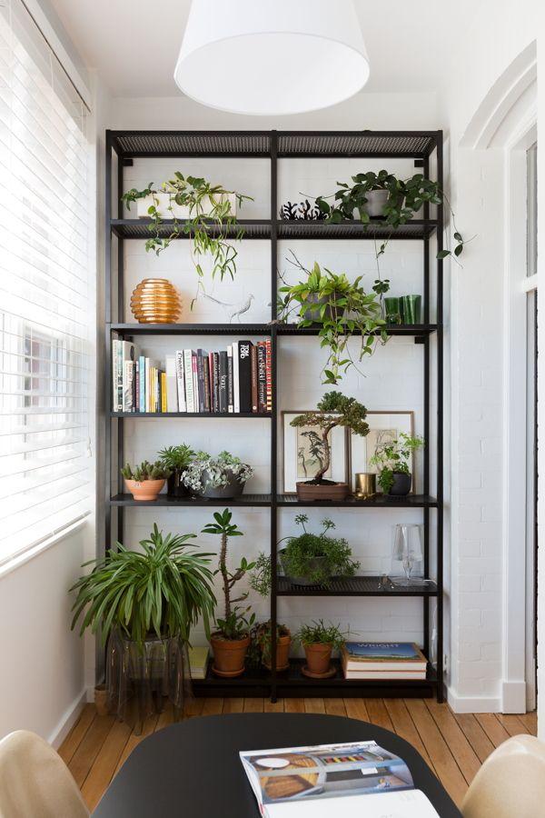 Unkillable-Indoor-Plants-tfad
