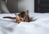 Πως να κάνεις τη μετακόμιση εύκολη για τη γάτα σου