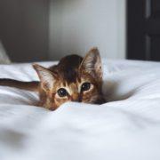 Πως να κάνεις την μετακόμιση εύκολη για τη γάτα σου
