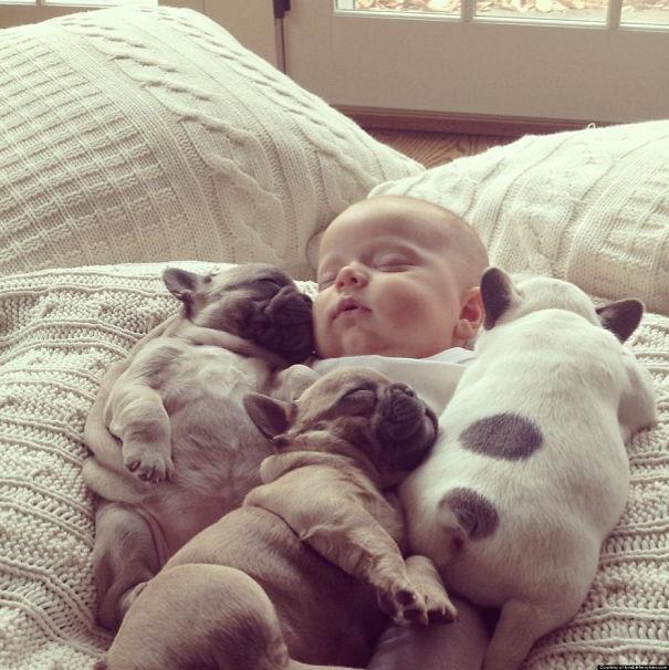 bulldog-puppy-cute-dog-photography-20__605