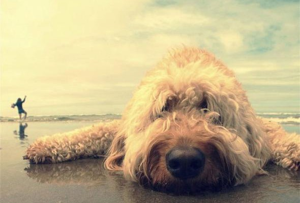 bummed-dog-at-beach