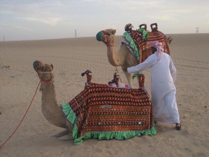 camel (Custom)