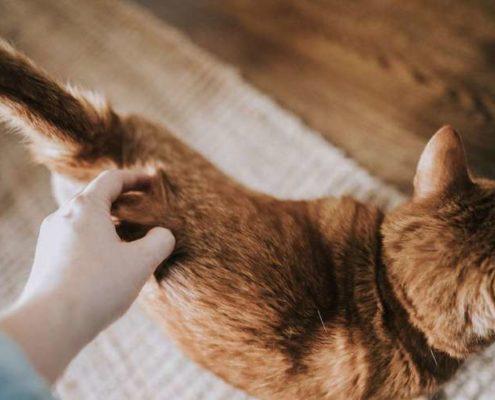 29 πράγματα που θα καταλάβεις μόνο αν συγκατοικείς με γάτα