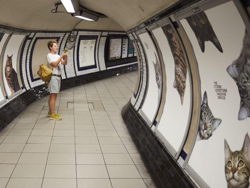 cat-ads-underground-subway-metro-london-2