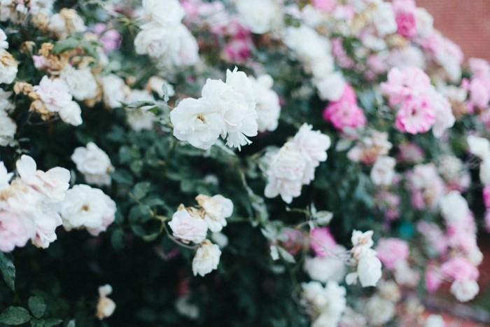 cultivating-inner-beauty-in-seasons-of-monotony-darling3-custom