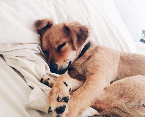 6 πράγματα που ο κτηνίατρος θέλει να σταματήσεις να κάνεις