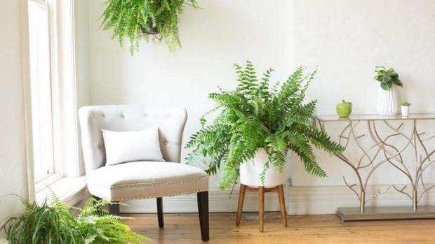 5 φυτά που θα γίνουν οι καλύτεροι σύμμαχοί σου ενάντια στην υγρασία αυτό το καλοκαίρι