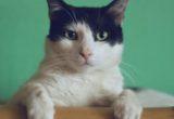 Ο λόγος που η γάτα σου τρελαίνεται για να καταστρέφει το χαρτί υγείας