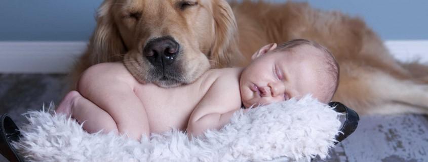 6 ράτσες σκύλων ιδανικές για οικογένεια