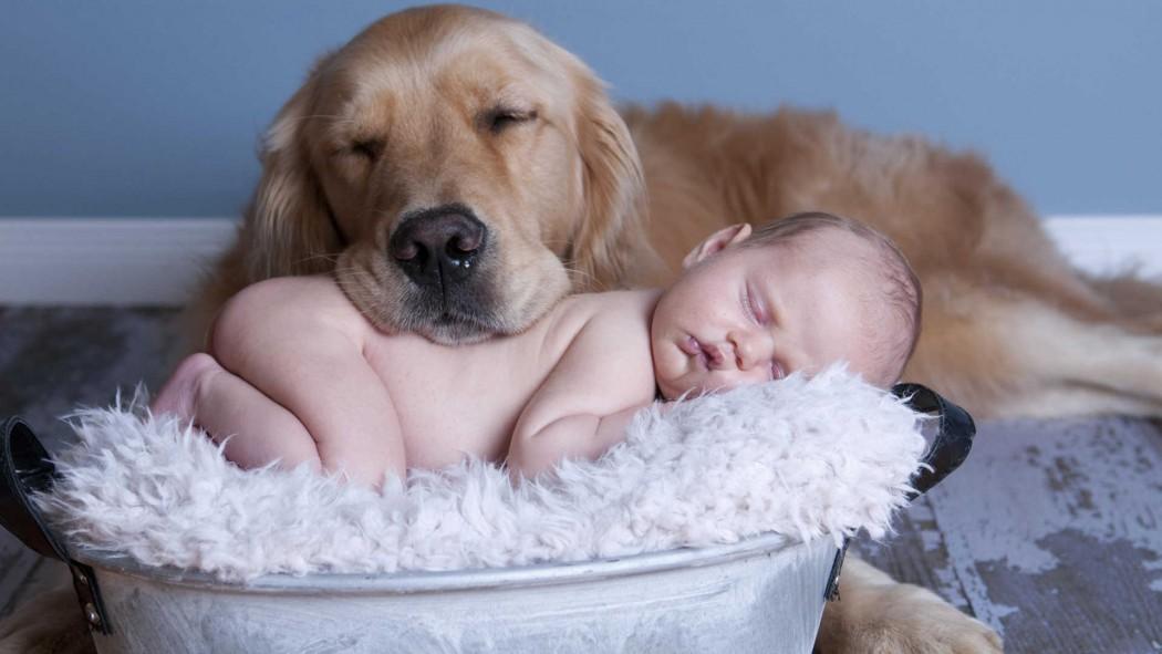 a68411d7272a 6 ράτσες σκύλων ιδανικές για οικογένεια - Savoir Ville