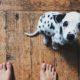 5 λάθη που κάνεις από την πρώτη στιγμή που φέρνεις το κουτάβι σου στο σπίτι