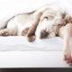 Αν απολαμβάνεις να μοιράζεσαι το κρεβάτι με τον σκύλο σου, υπάρχει μελέτη που σε δικαιώνει