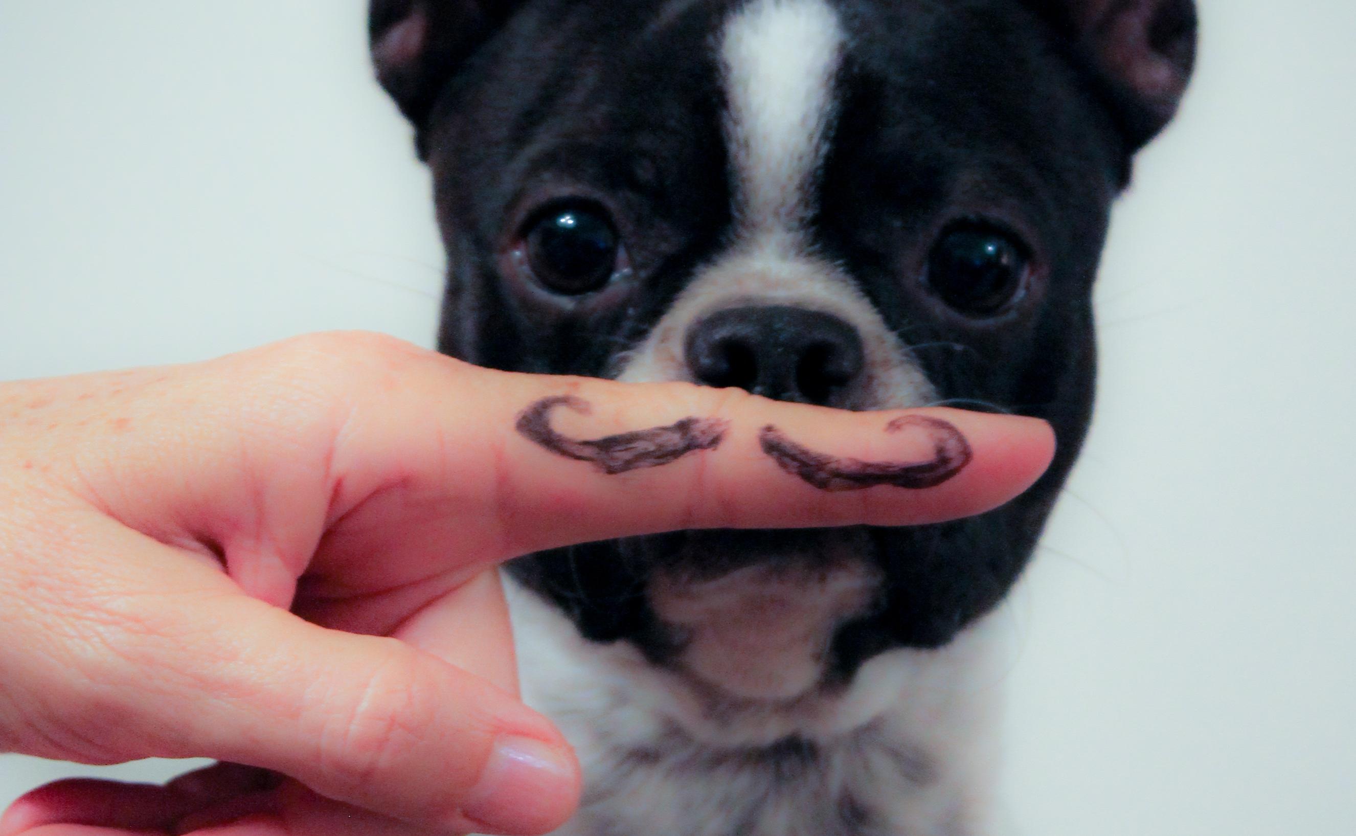 Τι ρατσα σκυλου πρεπει να εχεις αναλογα με την προσωπικοτητα σου