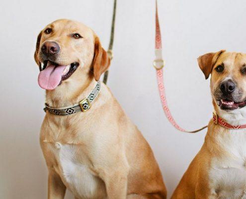 25 πράγματα που θα καταλάβεις μόνο αν έχεις σκύλο