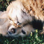 7 φυλές σκύλων που τα πάνε καλά με τις γάτες