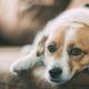 Πως να προετοιμάσεις τον σκύλο σου να μείνει ξανά μόνος στο σπίτι