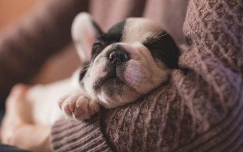 Δώρα που δεν ήξερες ότι χρειάζεται ο σκύλος σου ή ο σκύλος του φίλου σου