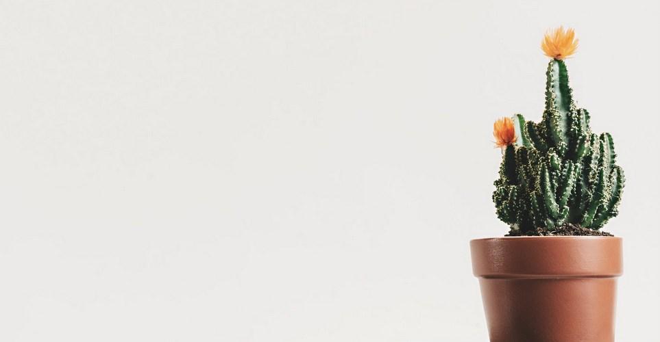10 φυτά που καθαρίζουν την ατμόσφαιρα του σπιτιού σύμφωνα με την NASA