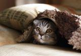 Όλα όσα πρέπει να ξέρεις για το πώς θα φροντίσεις την πρώτη σου γάτα