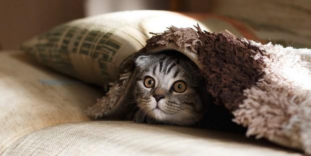 e09db8169f19 Όλα όσα πρέπει να ξέρεις για το πώς θα φροντίσεις την πρώτη σου γάτα ...