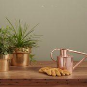 Μάθε ποιο φυτό να επιλέξεις με βάση το ζώδιό σου