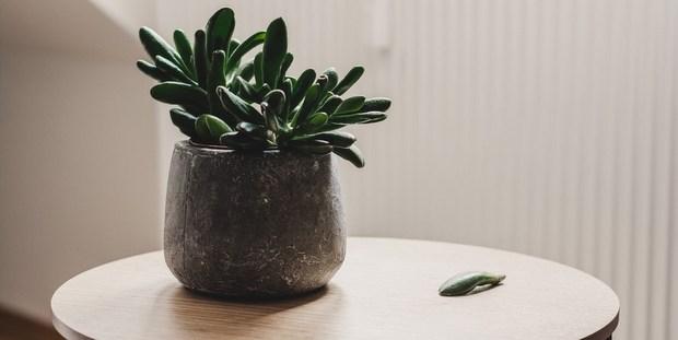 Η minimal τάση αφορά και τα φυτά εσωτερικού χώρου