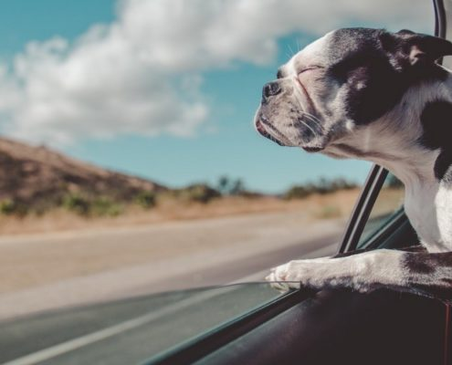 11 tips για να τραβήξεις την τέλεια φωτογραφία του κατοικίδιου σου