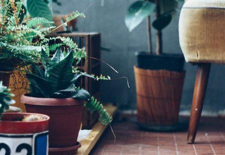 """5 φυτά εσωτερικού χώρου που λειτουργούν σαν """"φυσικά αντικαταθλιπτικά"""""""