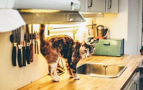 Αυτά τα 9 πράγματα δεν πρέπει να βάζεις στον φούρνο μικροκυμάτων