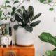 8 Instagram accounts για να ακολουθήσεις εάν αγαπάς και εσύ τα φυτά