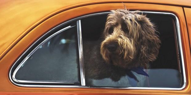 Όλα όσα θα χρειαστείς στις διακοπές με τον σκύλο σου