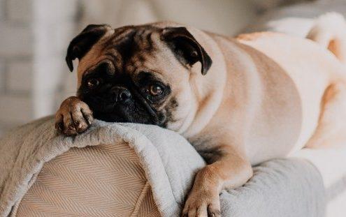 10 τροφές που δεν πρέπει να μοιράζεσαι με το σκύλο σου