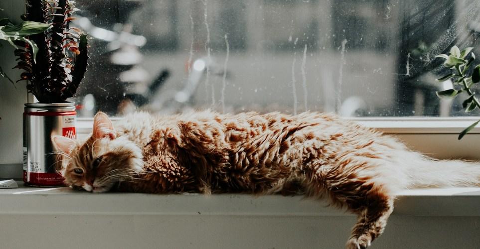 12 φυτά που είναι ασφαλή για τη γάτα σου