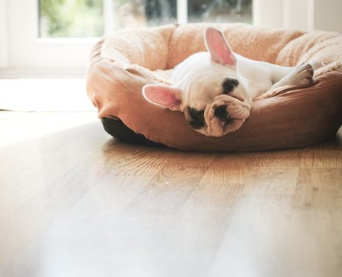 5 πράγματα που δεν πρέπει να ξεχνάει ένας κηδεμόνας σκύλου