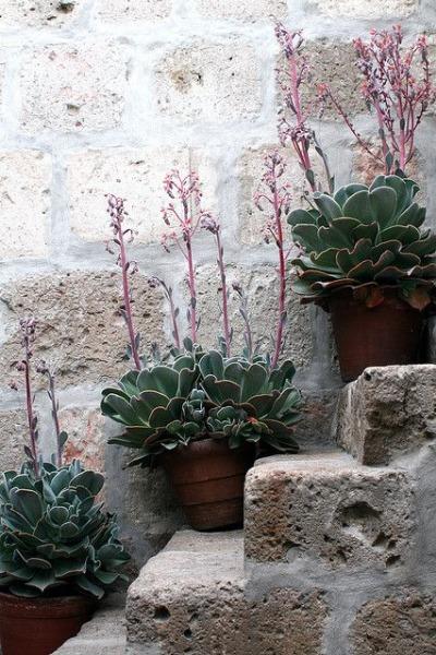 plants16